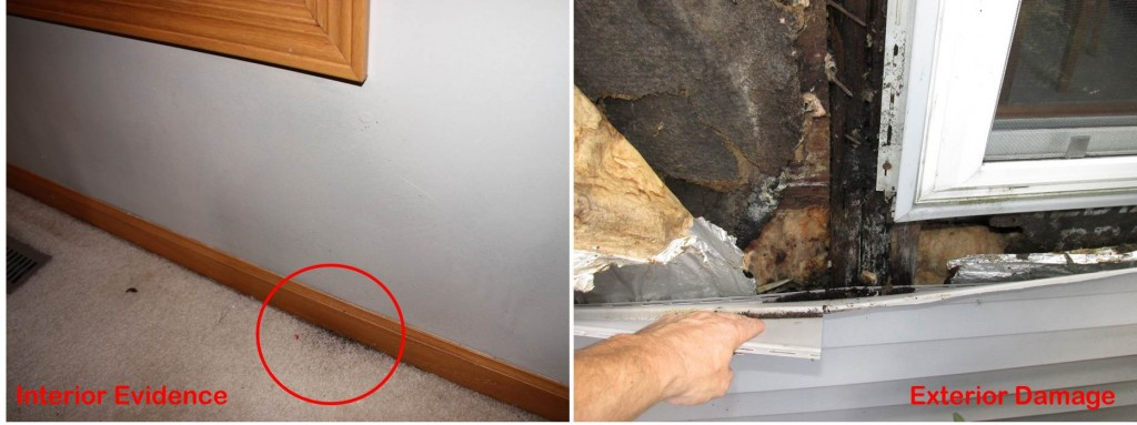 Buy Your Side Moisture-Intrustion-Water-Damage-Interior-Evidence